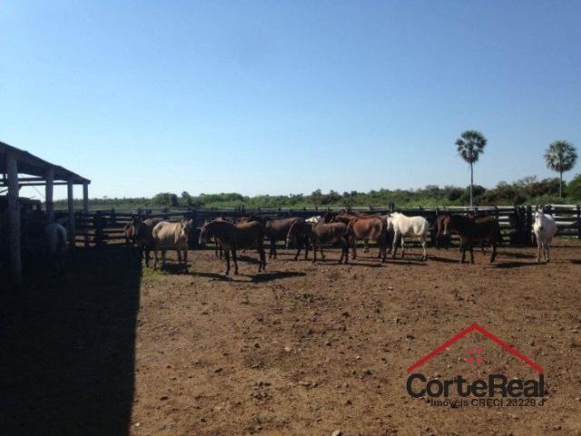 Chácara à venda em Centro, Corumbá cod:8013 - Foto 7