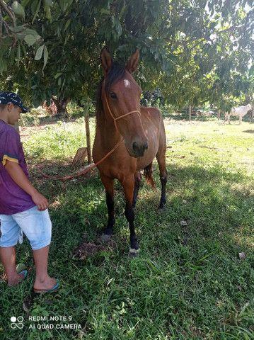 Cavalo enraçado com mangalarga  - Foto 2