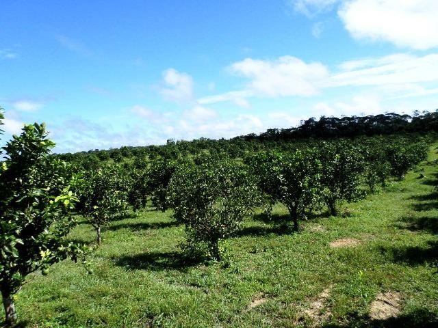 Fazenda na AM 010 km 110 2.100.000 - Foto 4