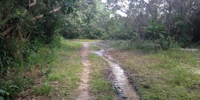 Morros - Ma: Vendo uma Excelente Propriedade Rural - Foto 15