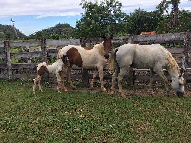 Fazenda com 980 hectares no município de Palmeirais-PI, 95 km de Teresina - Foto 3