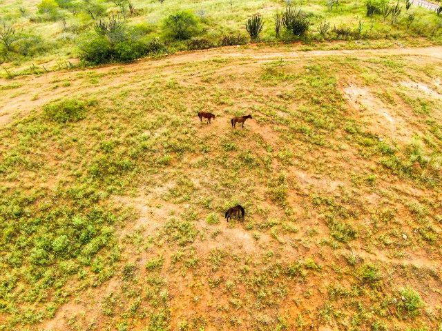 Fazenda à venda, 308 Hectares por R$ 770.000 - Sítio Novo/RN - Foto 10