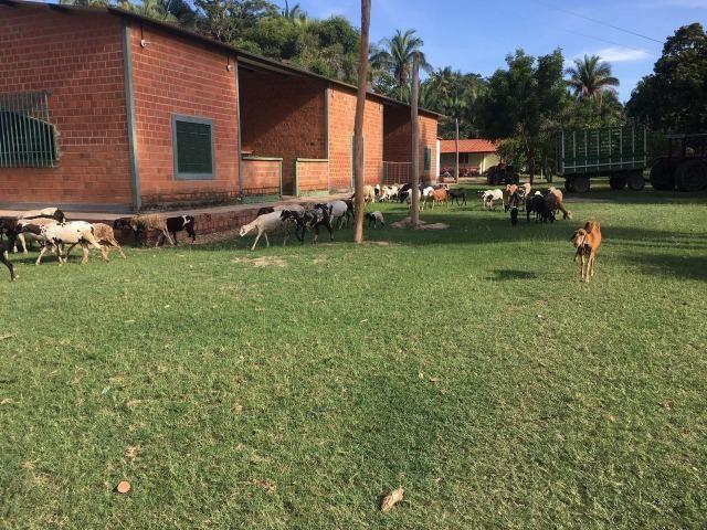 Fazenda com 980 hectares no município de Palmeirais-PI, 95 km de Teresina - Foto 6
