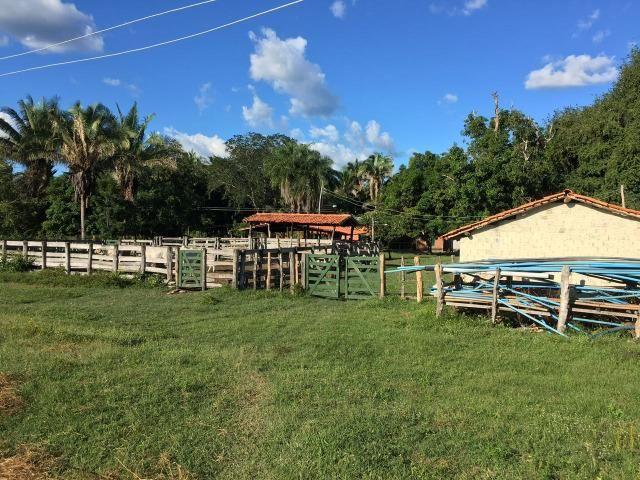 Fazenda com 980 hectares no município de Palmeirais-PI, 95 km de Teresina - Foto 9