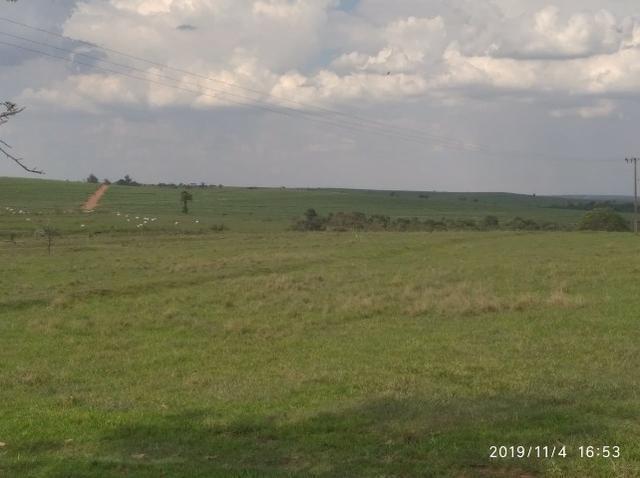 Vendo fazenda 250 alqueires próxima a presidente prudente - Foto 11