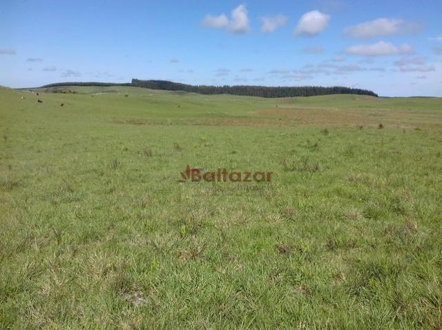Vendo este excelente e magnífico campo, um verdadeiro paraíso, com a área de 150 hectares - Foto 5