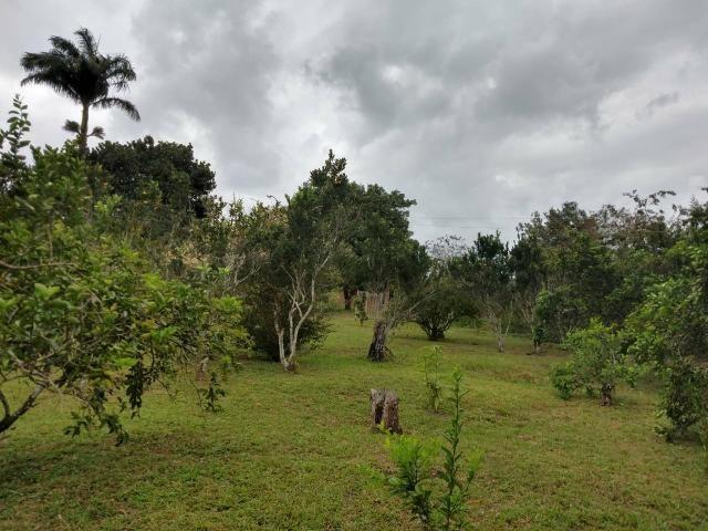 Sitio 2 casas dentro 2 hectares - Foto 2