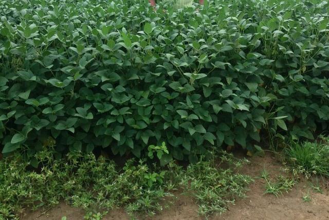 Fazenda em Amambai-MS