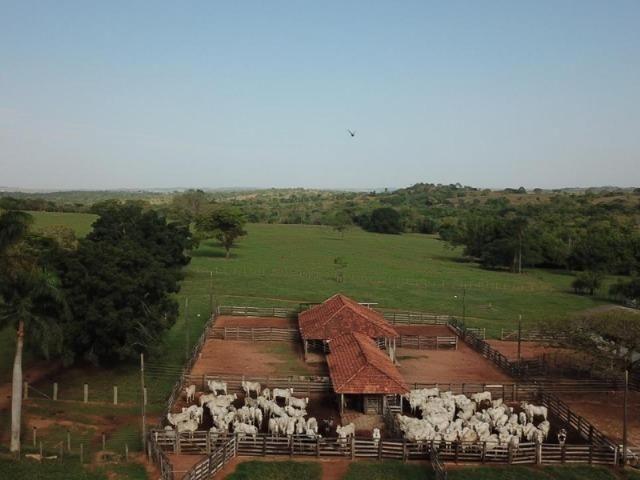 625 Alq. na Cultura | Ipameri-Goiás. Abaixo do Preço!