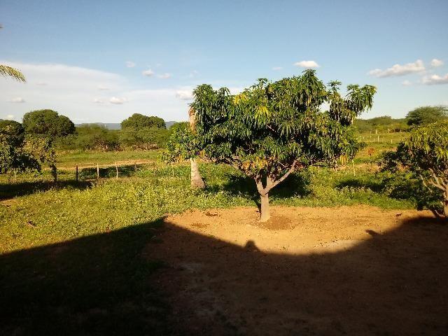 Propriedade rural - Foto 15
