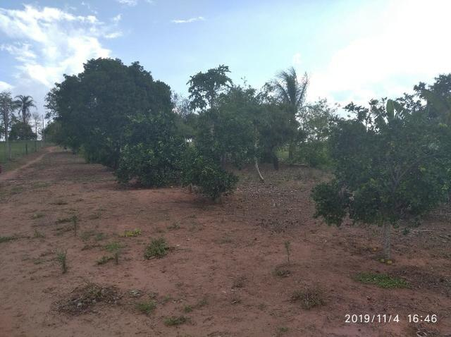 Vendo fazenda 250 alqueires próxima a presidente prudente - Foto 6