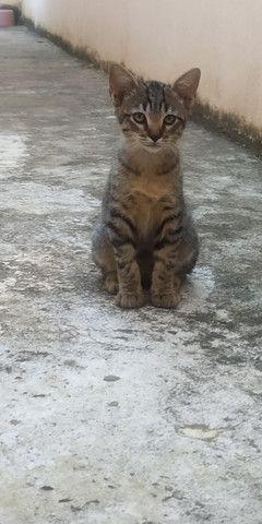 Filhote de gato - macho - Foto 4