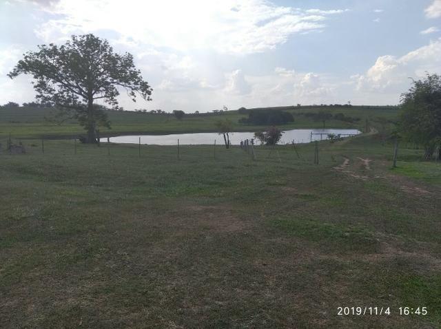 Vendo fazenda 250 alqueires próxima a presidente prudente - Foto 2