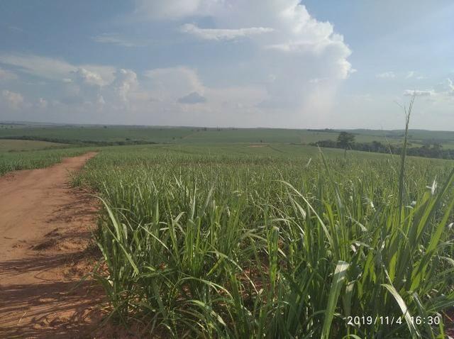Vendo fazenda 250 alqueires próxima a presidente prudente - Foto 4
