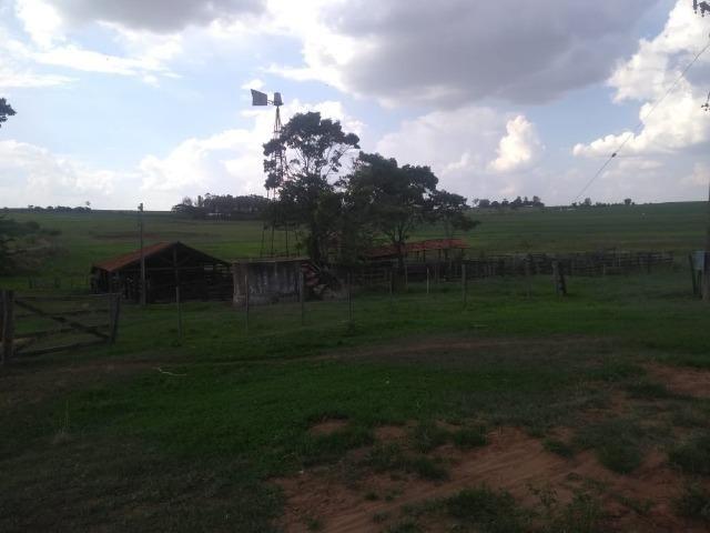 Vendo fazenda 250 alqueires próxima a presidente prudente - Foto 14