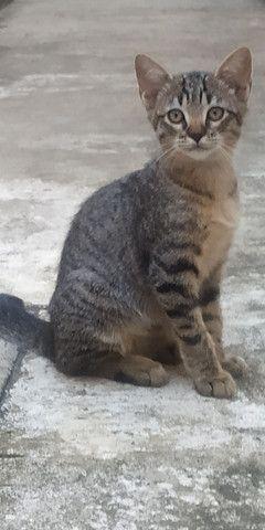 Filhote de gato - macho - Foto 3