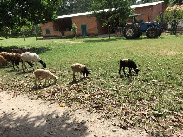 Fazenda com 980 hectares no município de Palmeirais-PI, 95 km de Teresina - Foto 11