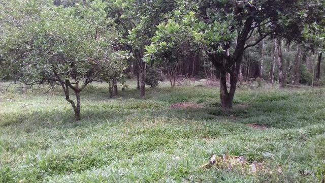 Fazenda 15 alqueires - Foto 12