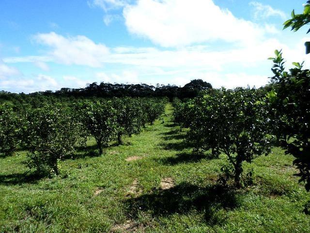 Fazenda na AM 010 km 110 2.100.000 - Foto 3