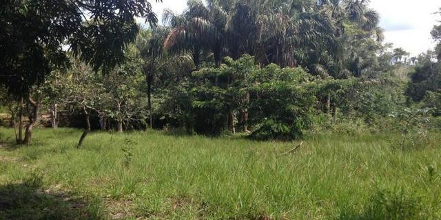 Morros - Ma: Vendo uma Excelente Propriedade Rural - Foto 9