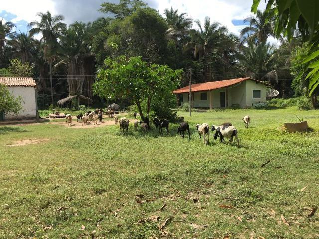 Fazenda com 980 hectares no município de Palmeirais-PI, 95 km de Teresina - Foto 12
