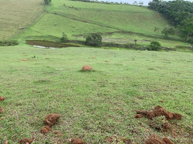 Lotes de terrenos com 5 mil metros - ideal para sua chacara,preço indiscutivel!!! - Foto 4