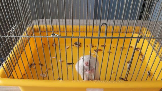 Gaiola e hamster - Foto 2