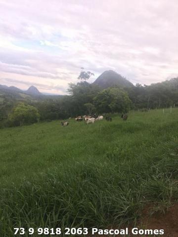Fazenda a venda Bahia 30 hectares - Foto 2
