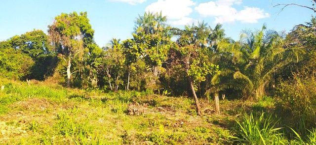 Vendo terreno na vila vitória  - Foto 6