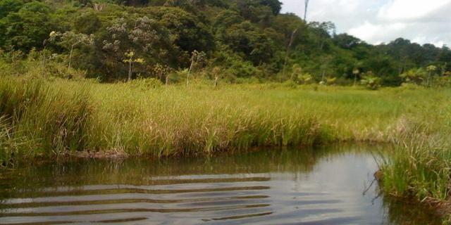 Zé Doca - Maranhão: Vendo Propriedade Rural - Foto 19