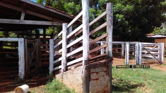 Fazenda de 13 alq. em Trindade - Foto 14