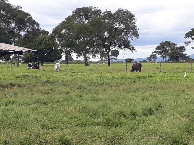 Área para confinamento ou laticínio na comunidade olho dagua na BR 364 a 30 km de Cuiabá - Foto 9