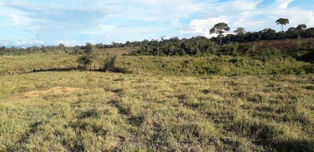 Fazenda em Roraima na BR210 - Caroebe - Foto 4