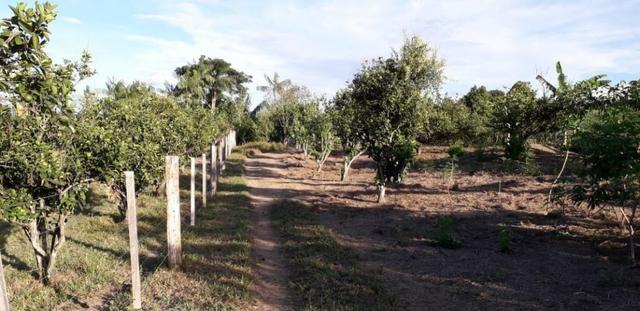 Fazenda em Roraima na BR210 - Caroebe - Foto 8