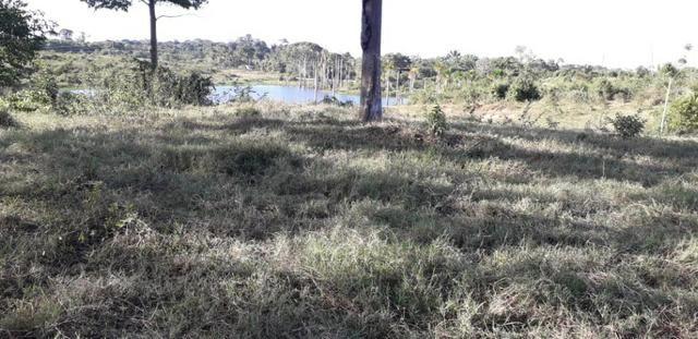 Fazenda em Roraima na BR210 - Caroebe - Foto 3