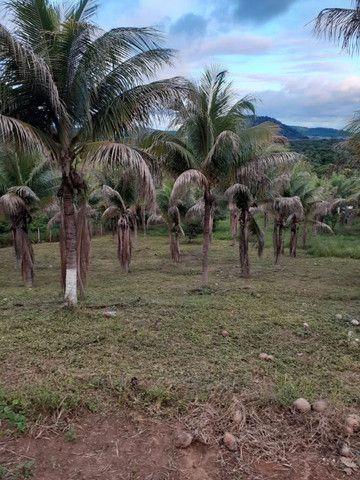 Vendo/Troco chacaras com pes de coco, caju, limao - Foto 2
