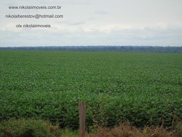 Fazenda coprador de fazenda nikolaiimoveis