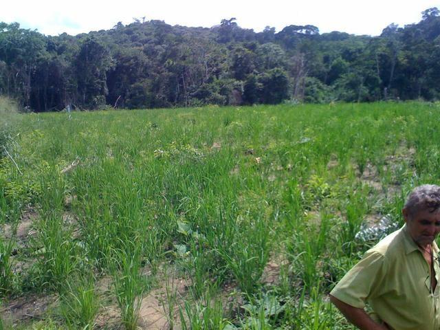 Zé Doca - Maranhão: Vendo Propriedade Rural - Foto 6