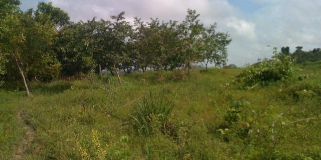 Zé Doca - Maranhão: Vendo Propriedade Rural - Foto 15