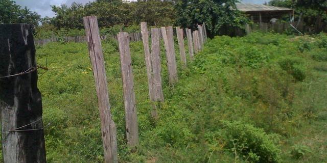Zé Doca - Maranhão: Vendo Propriedade Rural - Foto 13