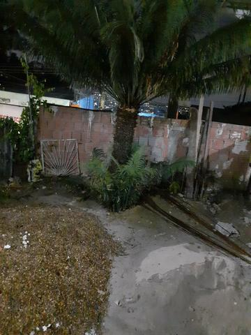 Palmeira ornamental - Foto 2
