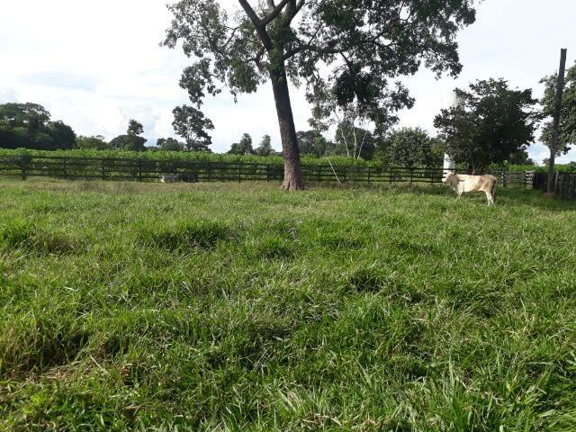 Área para confinamento ou laticínio na comunidade olho dagua na BR 364 a 30 km de Cuiabá - Foto 19