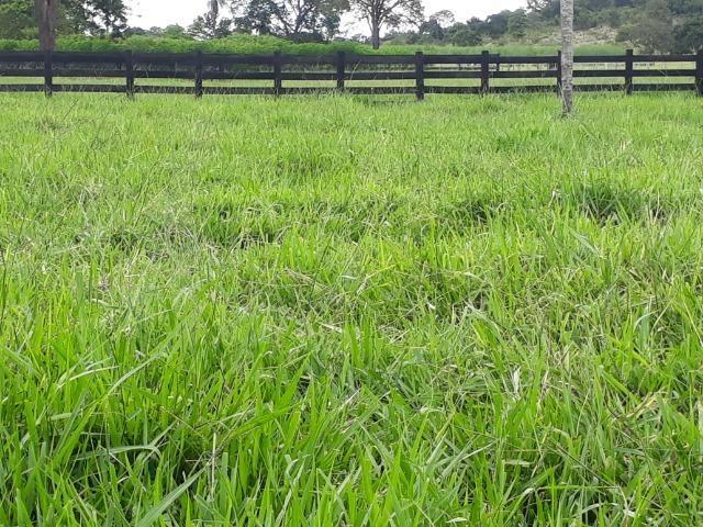 Área para confinamento ou laticínio na comunidade olho dagua na BR 364 a 30 km de Cuiabá - Foto 7