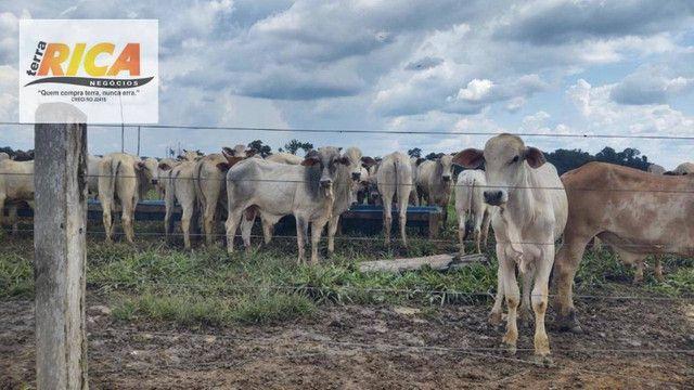 Fazenda com 11.000 Hectares à venda, na Zona Rural - Novo Aripuanã/AM - Foto 3