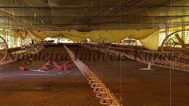 Sítio com granja, capacidade para 30.000 frangos (Nogueira Imóveis Rurais) - Foto 13
