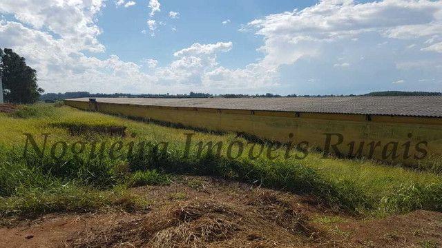 Sítio com granja, capacidade para 30.000 frangos (Nogueira Imóveis Rurais) - Foto 3
