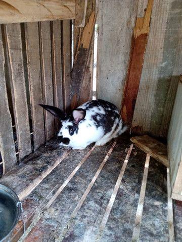 coelhos  - Foto 2