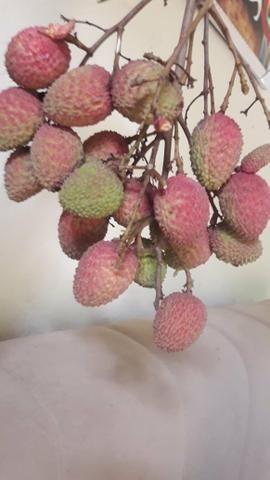 Mudas frutíferas, nativas e ornamentais - Foto 6