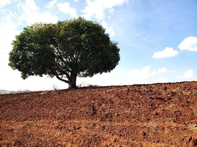 Sítio em Abatiá, Norte Pioneiro do Paraná (54.450 m2) - Foto 13
