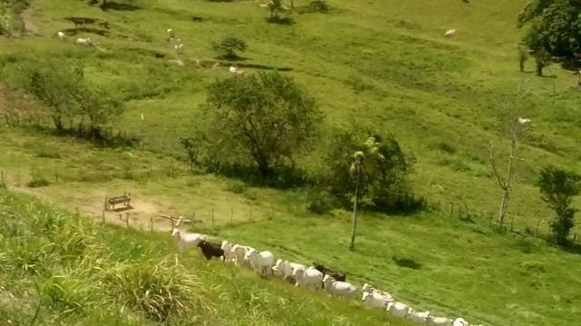 Fazenda em São José da Coroa Grande - Foto 9